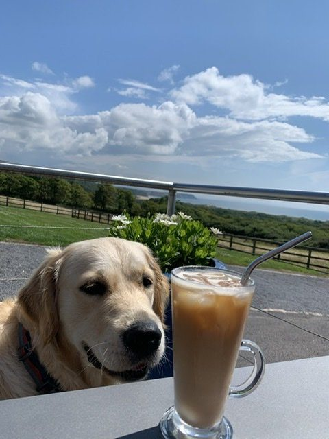 Iced Coffee with Mabel